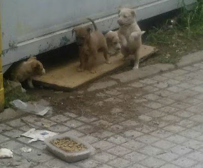 ¿Qué fue de los cachorros abandonados en una obra de Córdoba?
