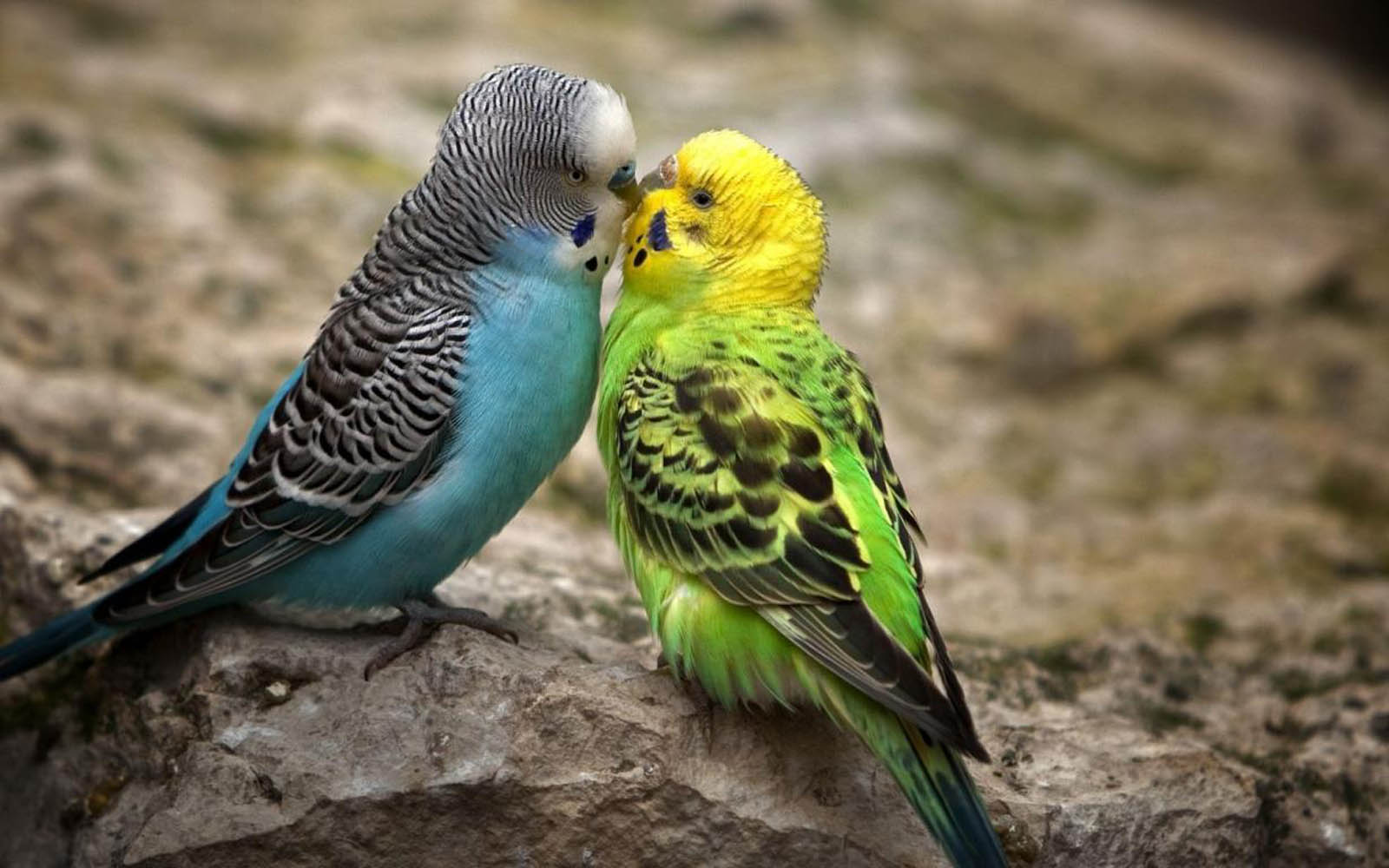 Love Bird Quotes Sad Poetry Quotes For Love Birds  I'm Not Going To Let You Break