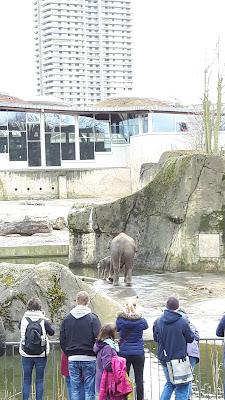 Elefantenbaby im Kölner Zoo - Familienreiseblog