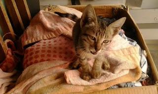 चूहे के न्याय से बिल्ली का अत्याचार भला