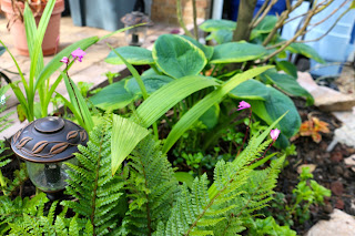 Tropical Gardening in New York City!: May 2016