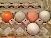 Fresh Green Colorful Eggs from the Farm - Thursday Two Questions #173
