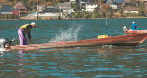 たたき網漁