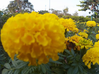 Yellow Flower Free Images free download