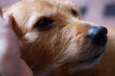 apprehensive puppy