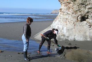 Como encontrar ouro na areia da praia