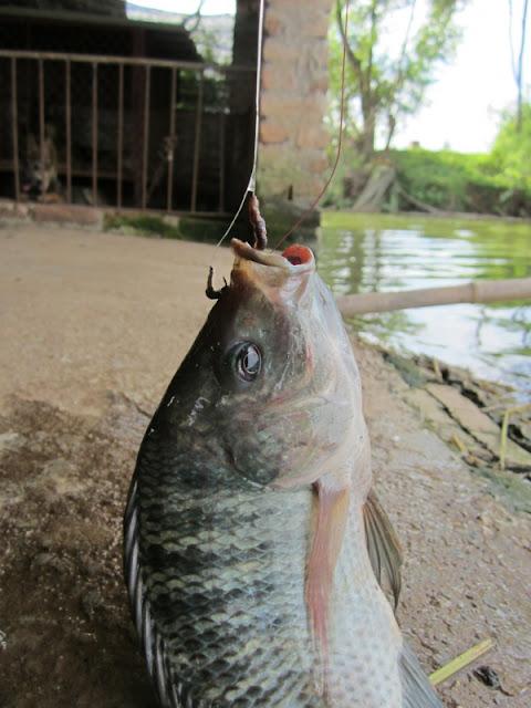 Câu chuyện quả báo xảy ra ở một câu lạc bộ câu cá tại Thái Lan