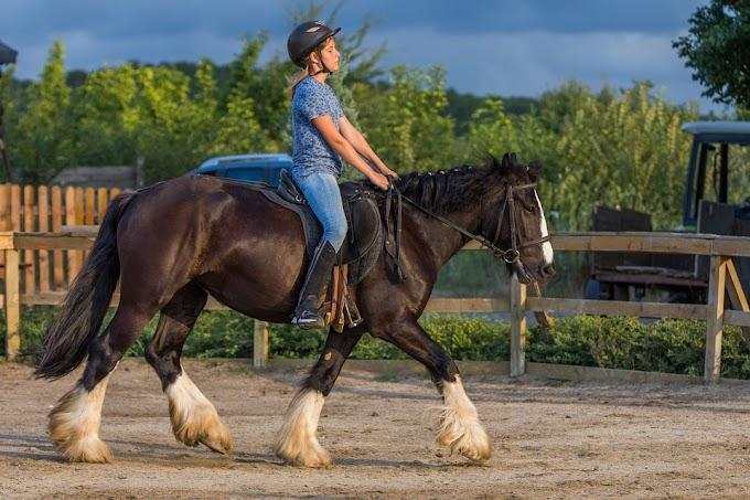 Curso para aprender a montar a caballo