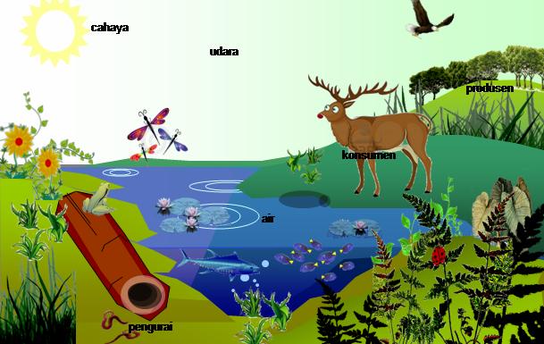 Mengenal Hewan Dan Tumbuhan Bioma Dan Ekosistem