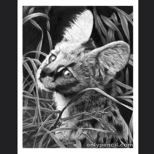 17-Serval-Cat-Lisandro-Peña-Animal-Drawings-with-Attention-to-Minute-Details-www-designstack-co