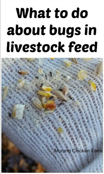 bugs | livestock feed