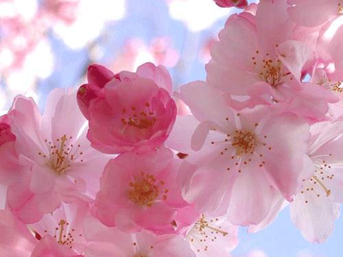 Imagenes Para Imprimir Flores