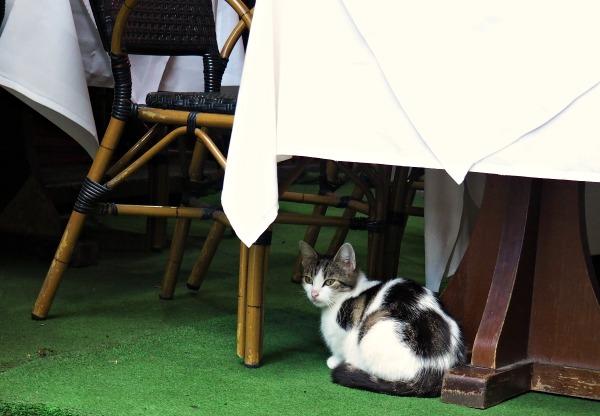 restaurant petite rue des bouchers brussels