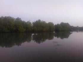 download artikel ayah tulisan ayah wisata mangrove sasak Orong Bukal pohon bakau Puyahan