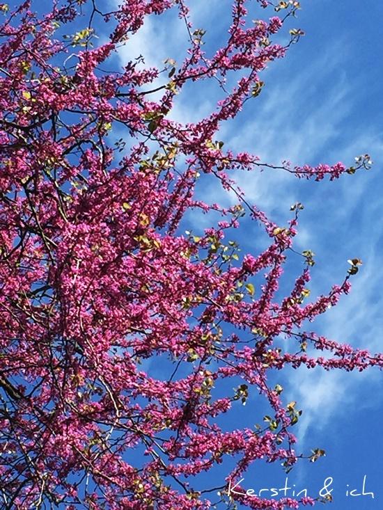 Blüten Natur Baum
