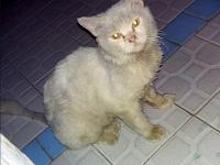 Ciri-ciri Kucing Terkena Jamur dan Cara Mencegahnya