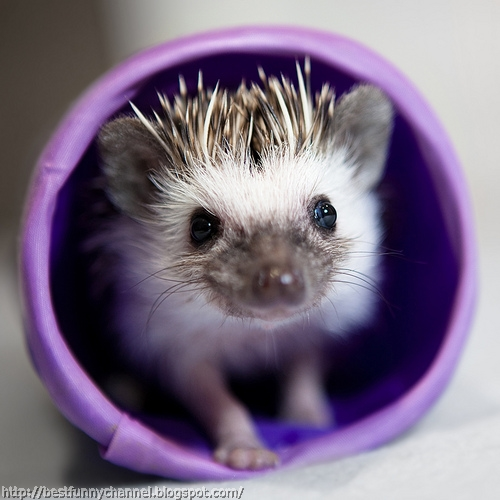 Hedgehog in a cup.
