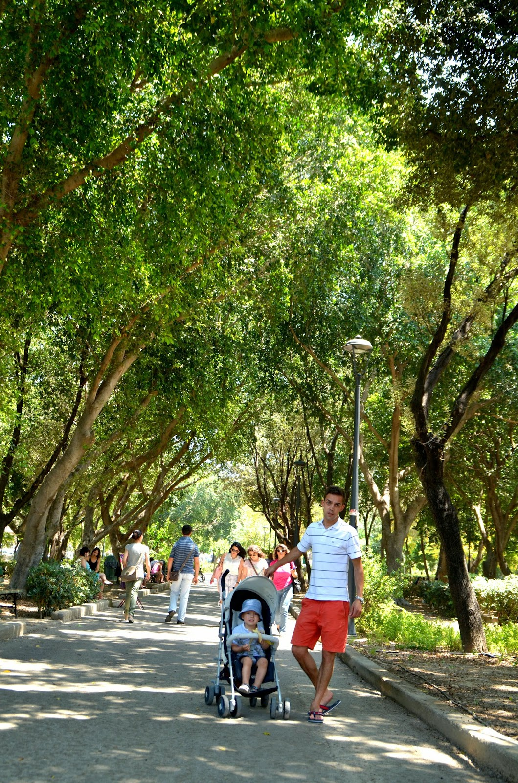 iraklion park tall trees crete