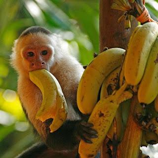 Nawóz z banana dla roślin