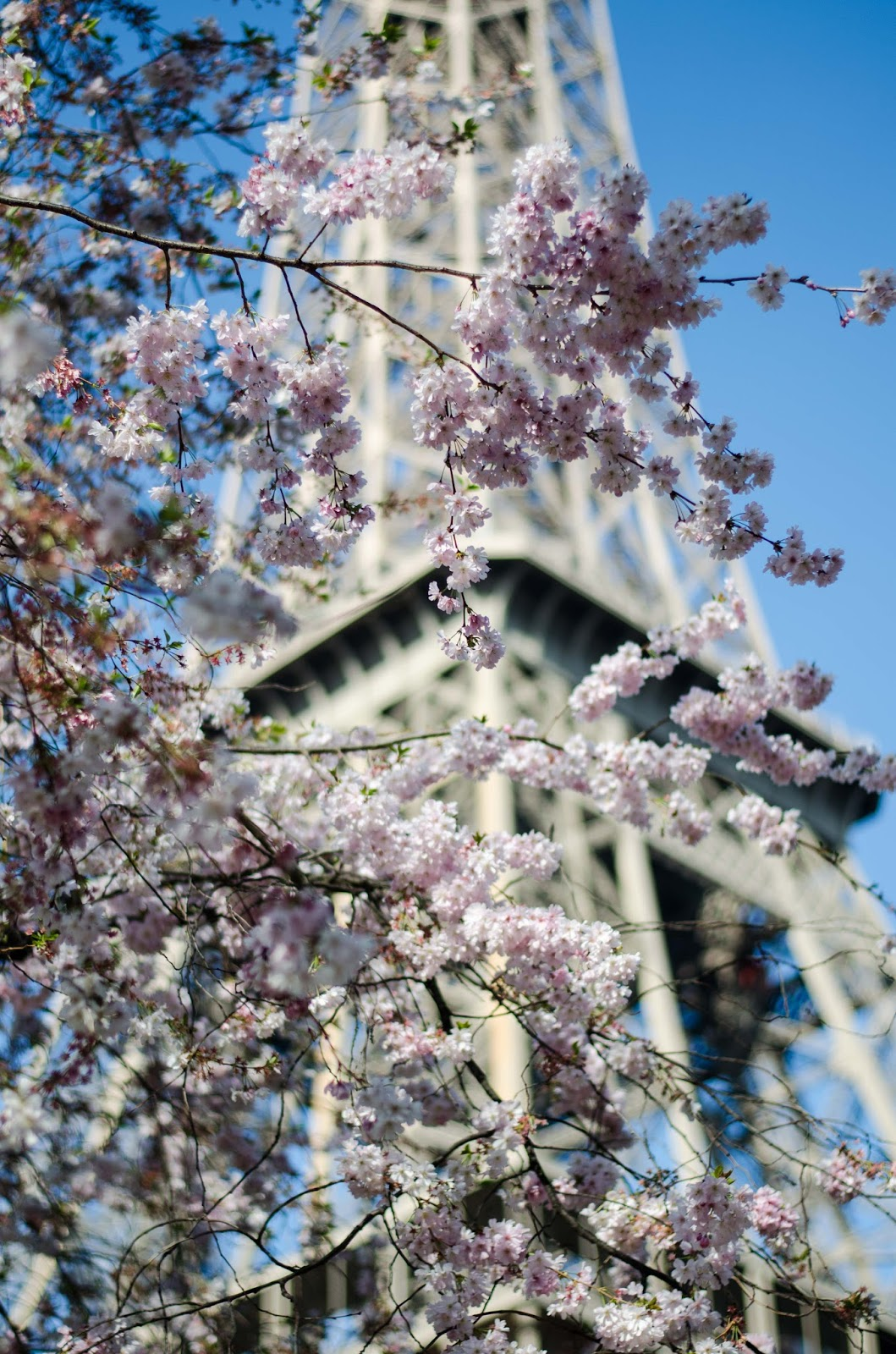paris eiffel tower spring blossom