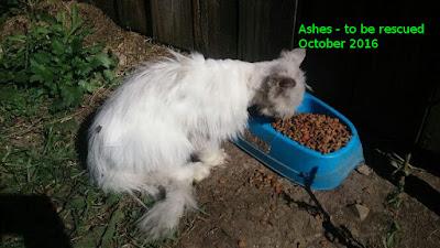 Adopted Fall 2016