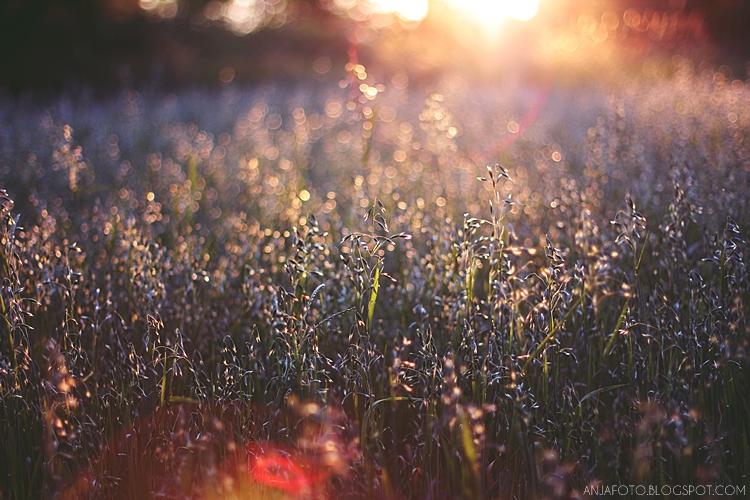 złota godzina, golden hour, ray of light, bokeh, canon 50mm 1.4