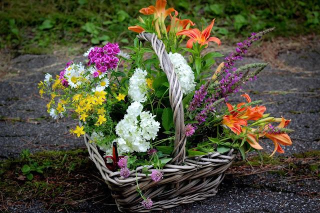 cueillette,fleurs,faire,des,bouquets,sauvages,cultivées,fleurs-des-champs,blog,anthracite-aime,blogue