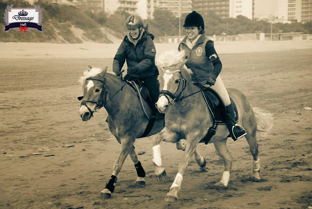 Racing Ahead: Can You Train Your Horse?