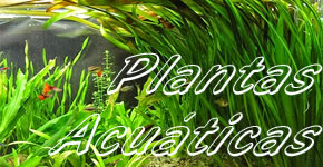 Club acuaristas bragado plantas acuaticas for Plantas para estanques de agua fria