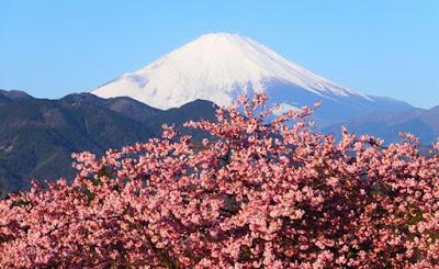 Matsuda Sakura Festival