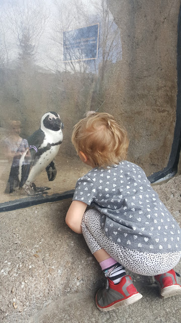 zoo-penguins