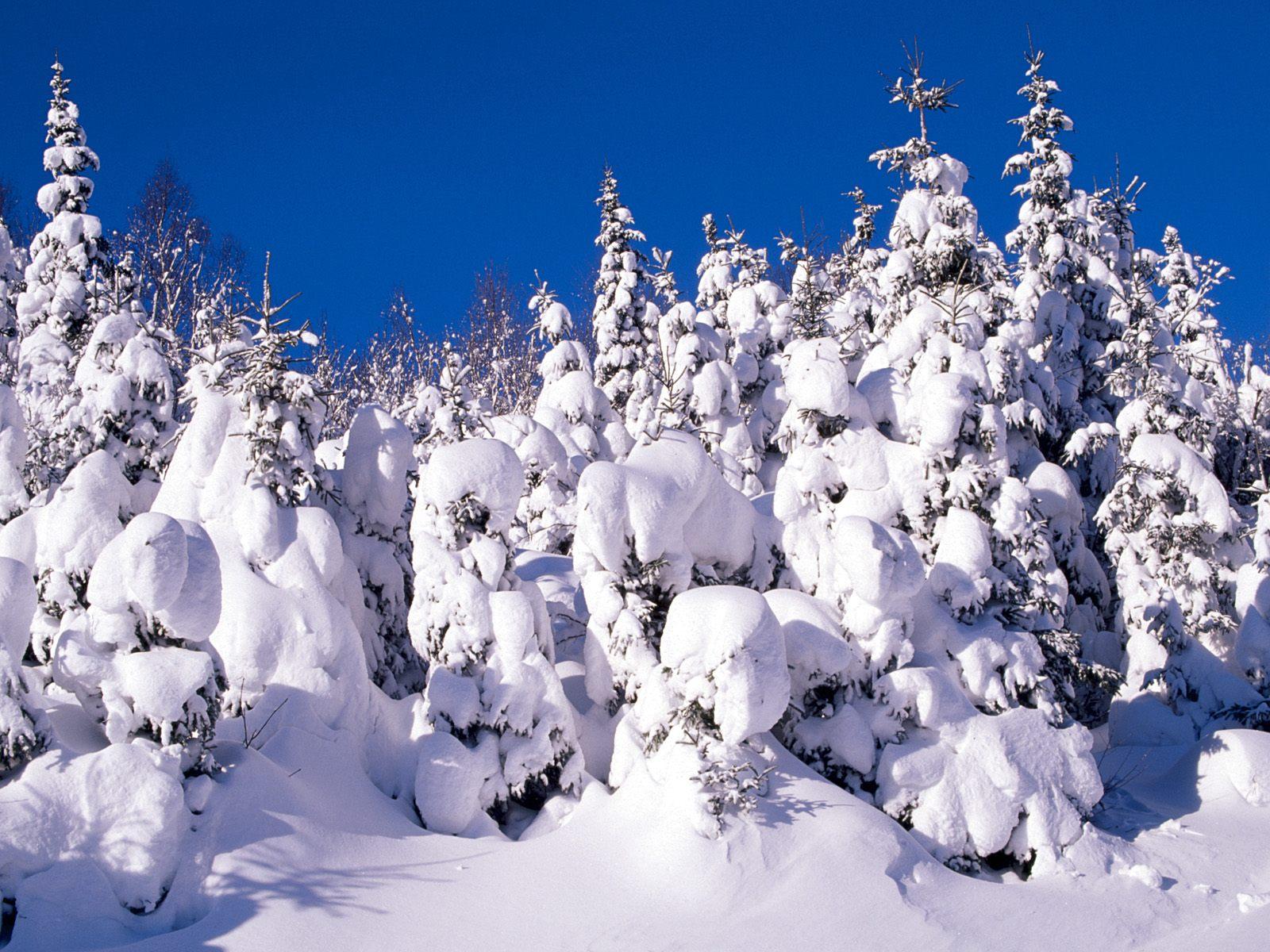 Best wallpaper collection best winter wallpapers - Winter desktop ...