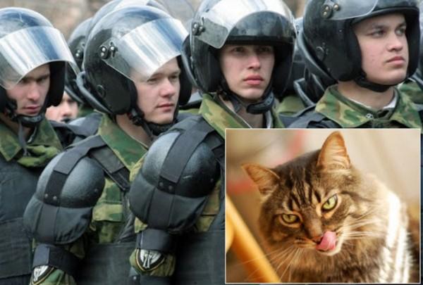 Wow, Polisi Moscow Dibuat Sibuk Kucing Pembawa Bom