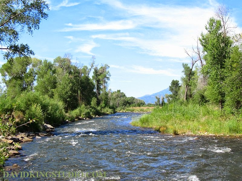 photograph nature provo river summer water trees