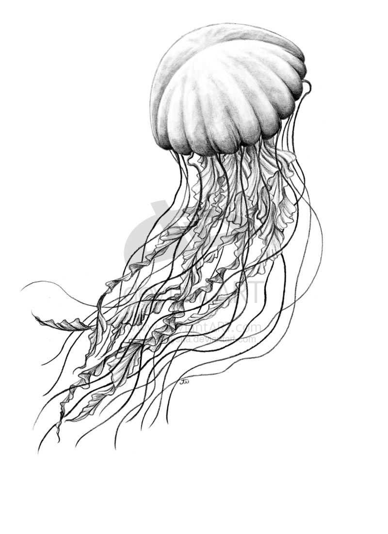 Images Of Simple Jellyfish Drawing Rock Cafe