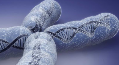 pembelahan sel, perbedaan mitosis dan meiosis, kromosom adalah, fungsi kromosom, pengertian kromosom, struktur kromosom,
