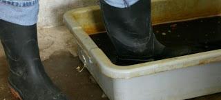 Sát trùng giày ủng trước khi vào trang trại.