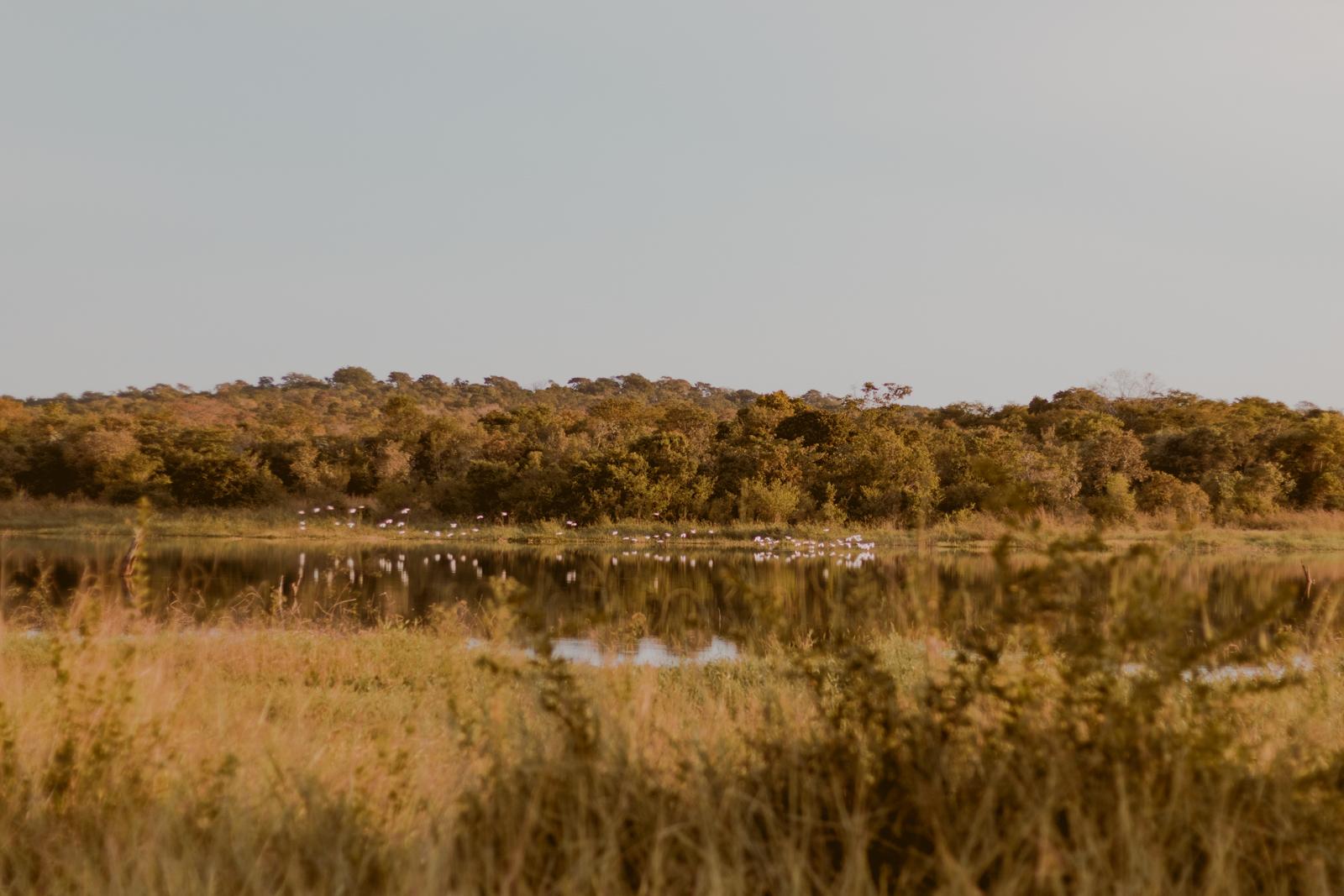 pássaros voando pra casa no lago