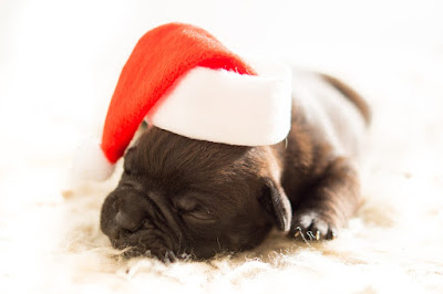 Top 10 Gift Ideas Every Dog Owner Will Love