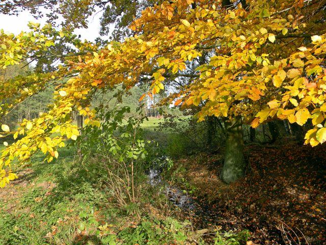 jesienne pejzaże, jesień, przyroda, liście, drzewa
