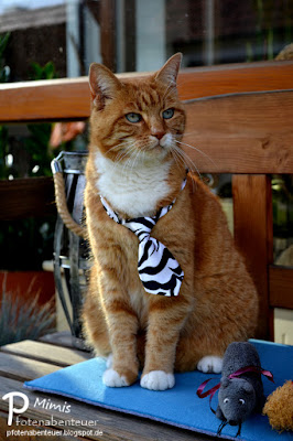 Katze Mimi mit stolz geschwellter Brust