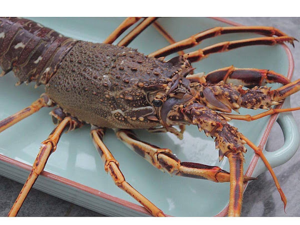What I Ate | Aaron's Luxury Lobster's |