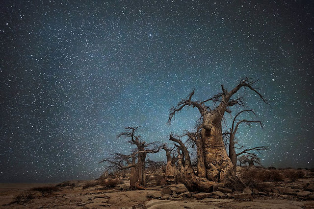 oldest trees beth moon diamond nights photography-3