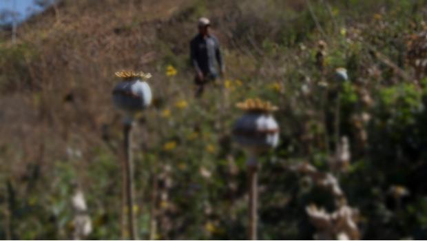 Destierran a 50 familias por negarse a sembrar amapola