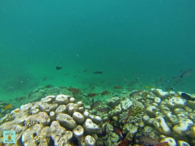 Snorkeling en el Archipiélago de Semporna, Borneo (Malasia)