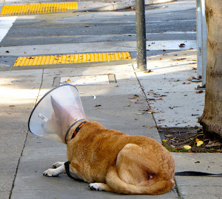 picture of a dog wearing a cone over it's head to keep it from licking itself