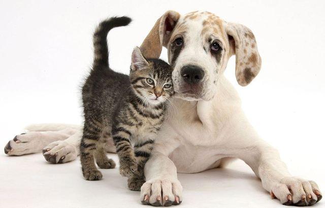 785f463a1a5f Το πρόβλημα είναι ότι τα περισσότερα σκυλιά αγαπούν να κυνηγούν ότι τρέχει  και οι περισσότερες γάτες θα τρέξουν αν δουν ένα μεγάλο