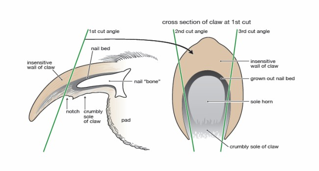 Πώς να κόψουμε τα νύχια του ζώου μας;