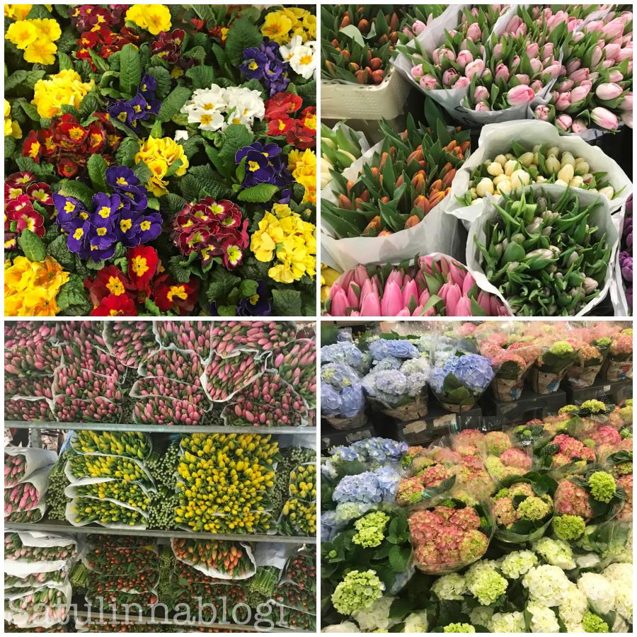 kevätesikko tulppaanait hortensia
