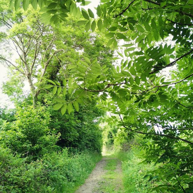 green trees, Connemara